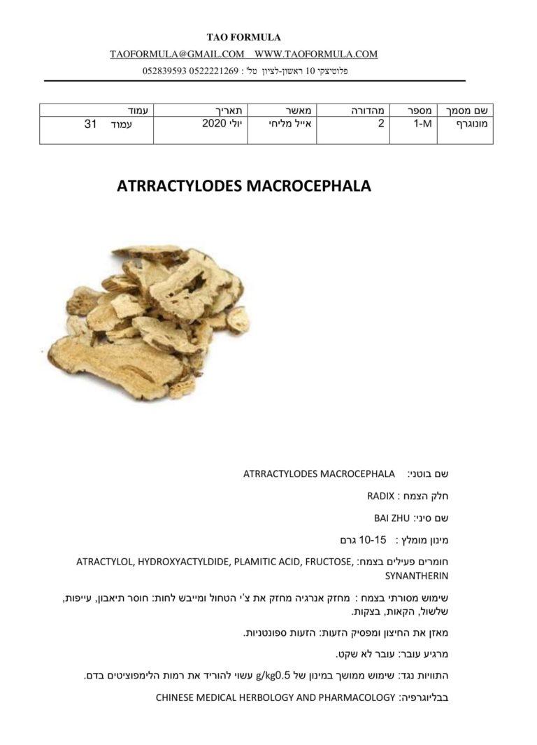 ATRRACTYLODES MACROCEPHALA 1