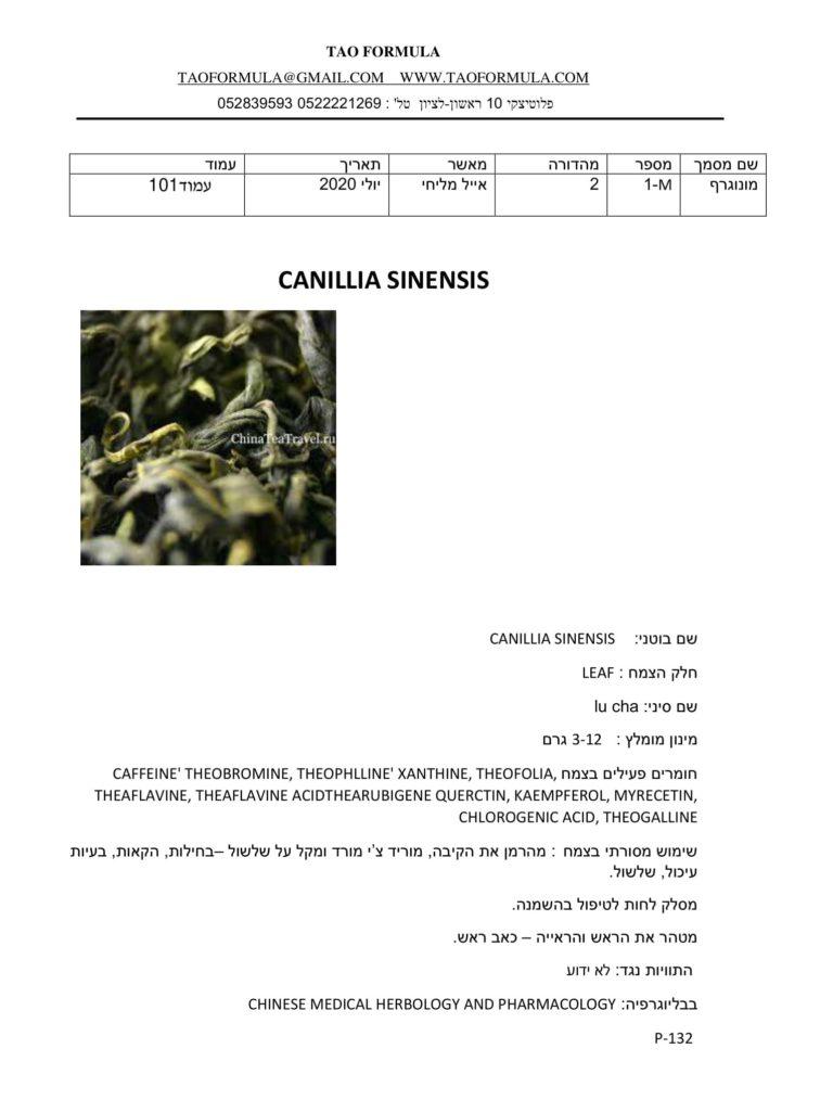 CANILLIA SINENSIS 1