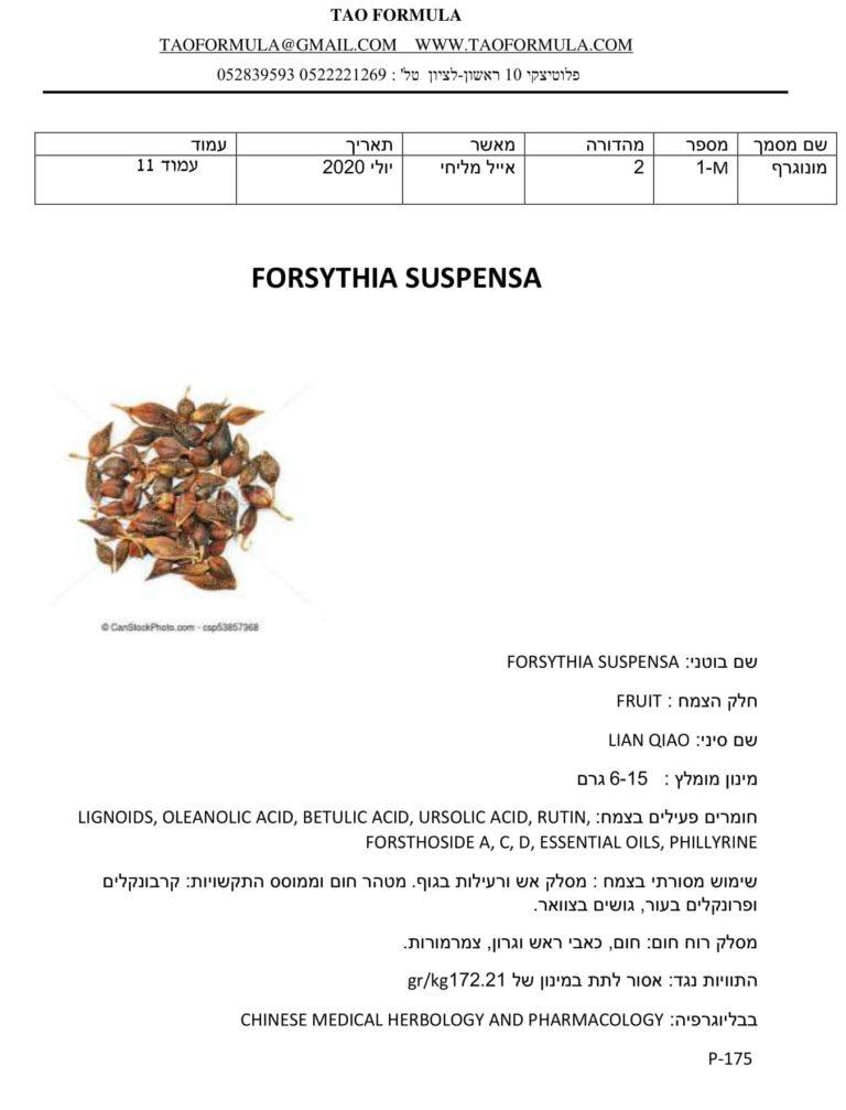 FORSYTHIA SUSPENSA 1