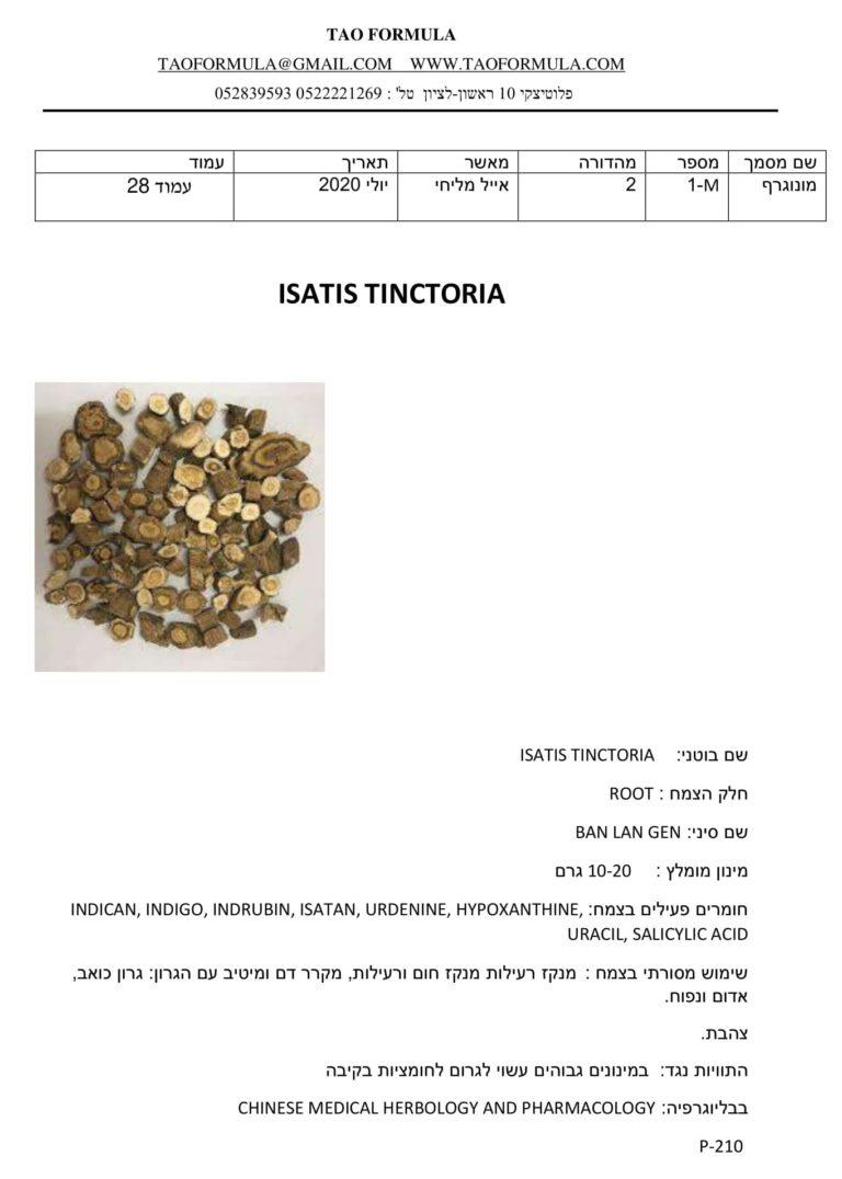 ISATIS TINCTORIA 1 1