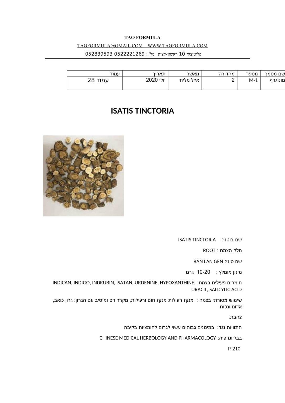 ISATIS TINCTORIA 1