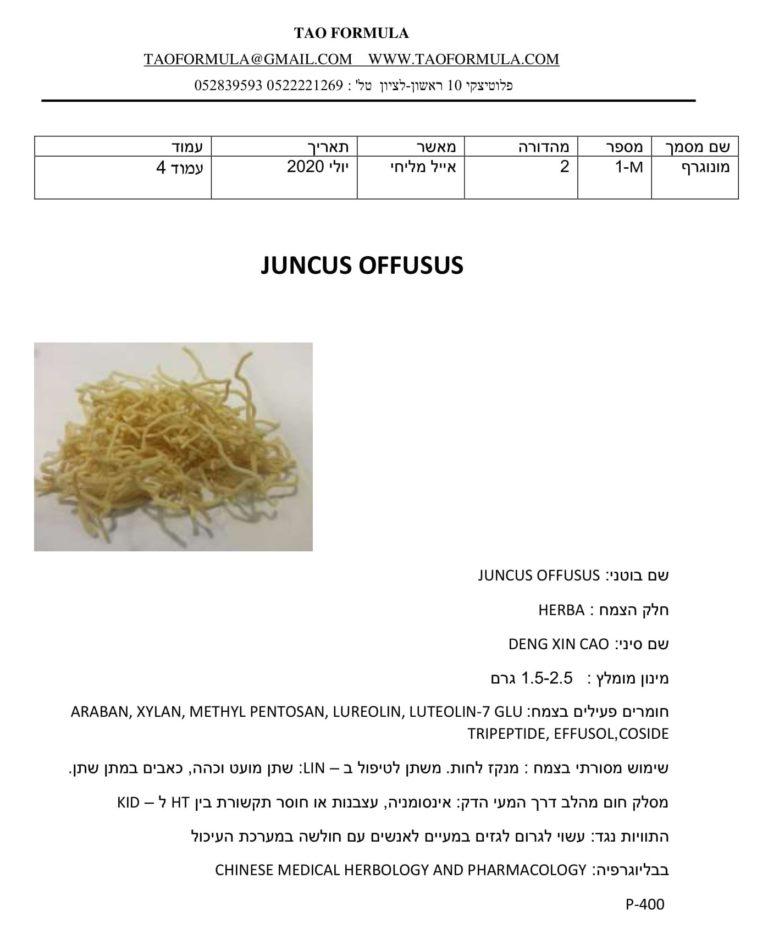 JUNCUS OFFUSUS 1