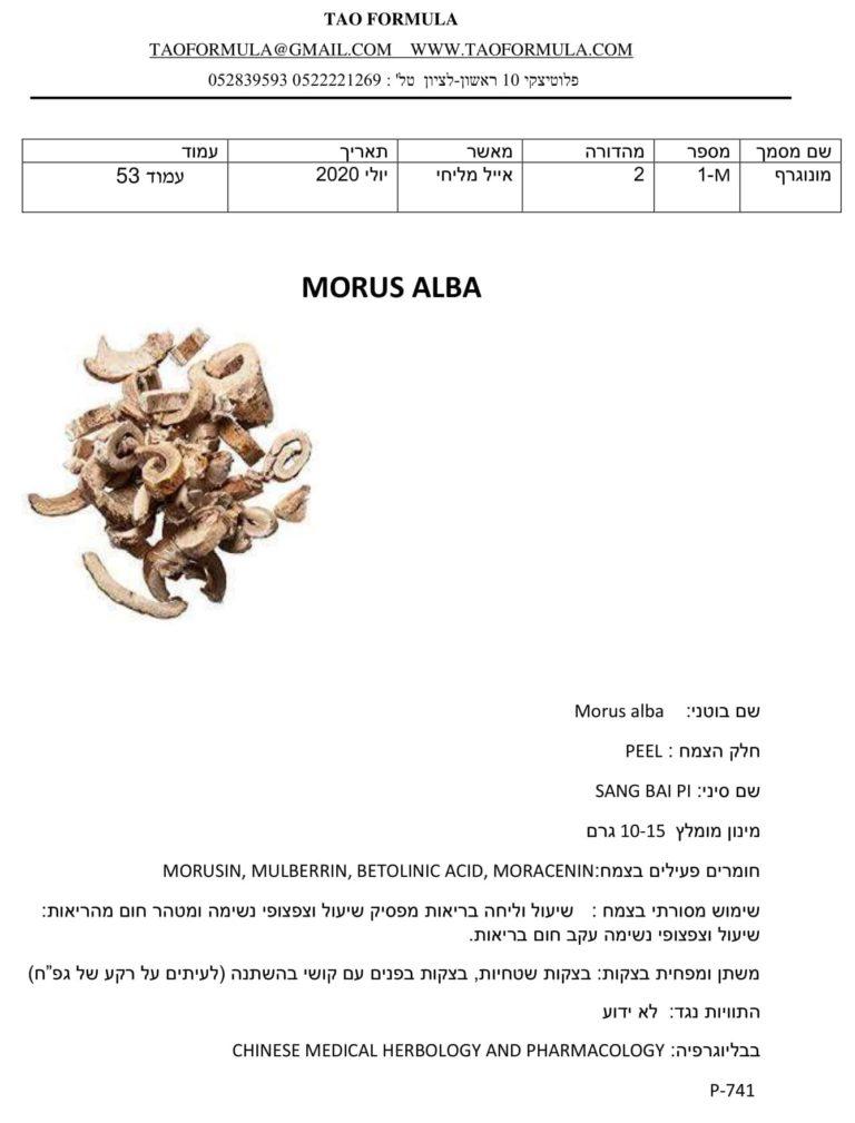 Morus alba 1