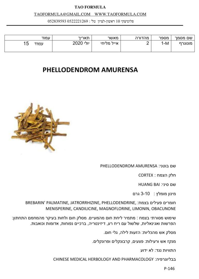 PHELLODENDROM AMURENSA 1