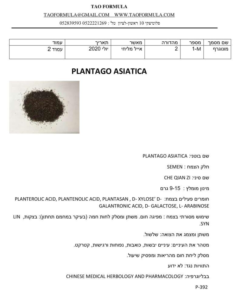 PLANTAGO ASIATICA 1