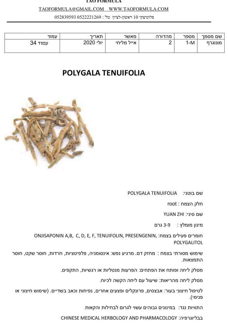 POLYGALA TENUIFOLIA 1