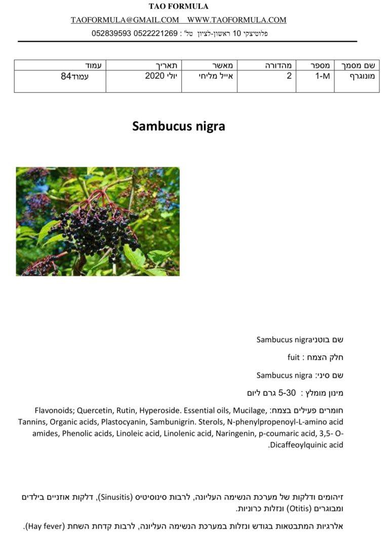 Sambucus nigra 1